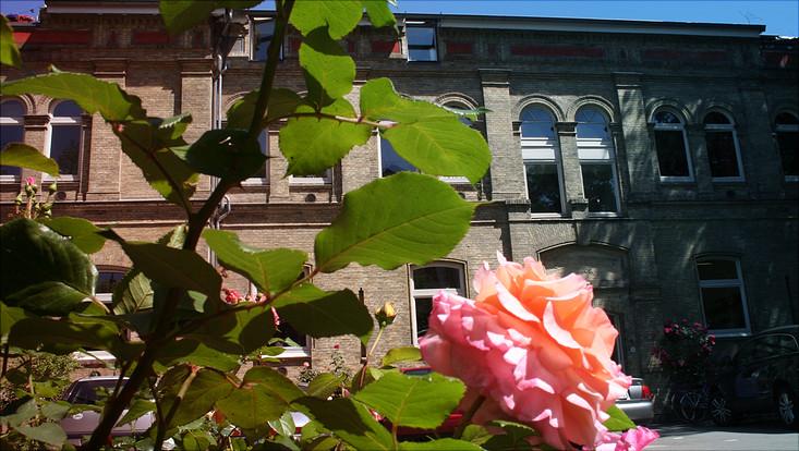 Außenansicht Career Center mit Rose im Vordergrund