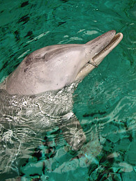 sind delfine fische
